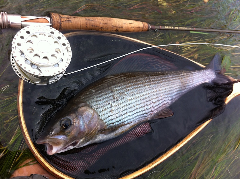 autumn grayling fly fishing river Irfon wales